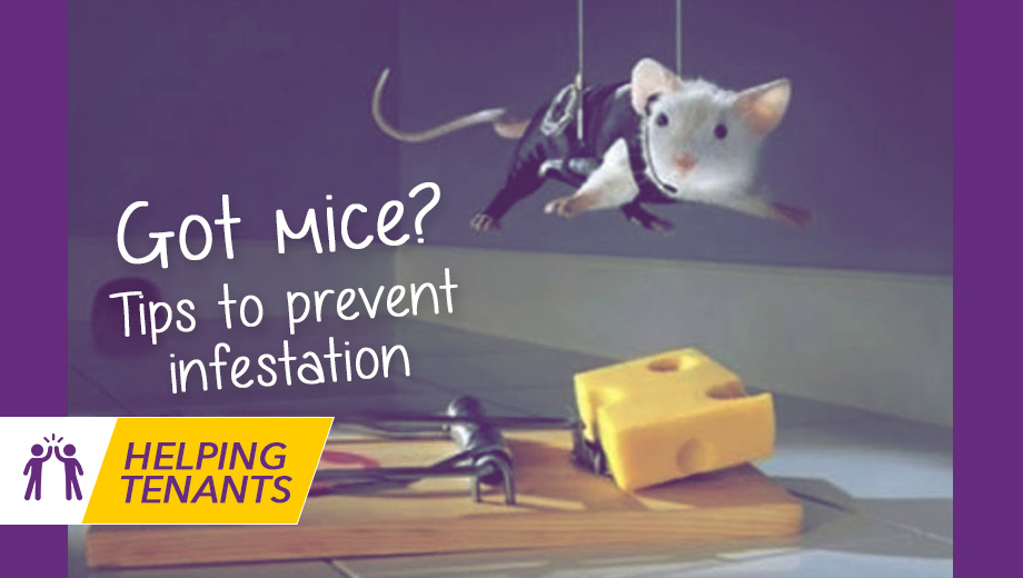 Got mice in the Property? You won't be alone!